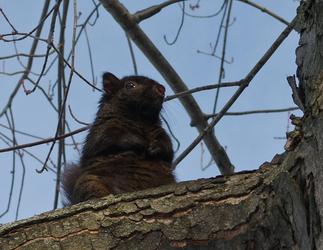Tree Dweller