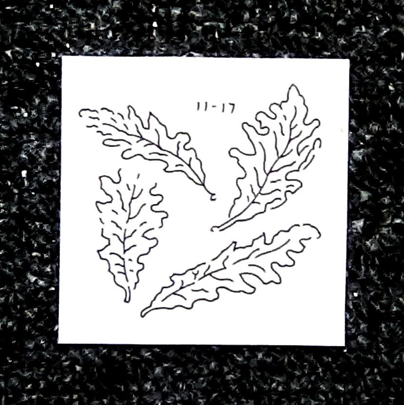 Leaf 11-17