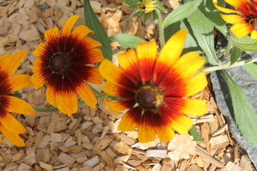 More orange flowers
