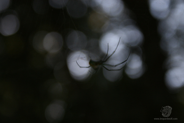 Spooky Orchard Spider 1