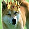 avatar of DogeKing