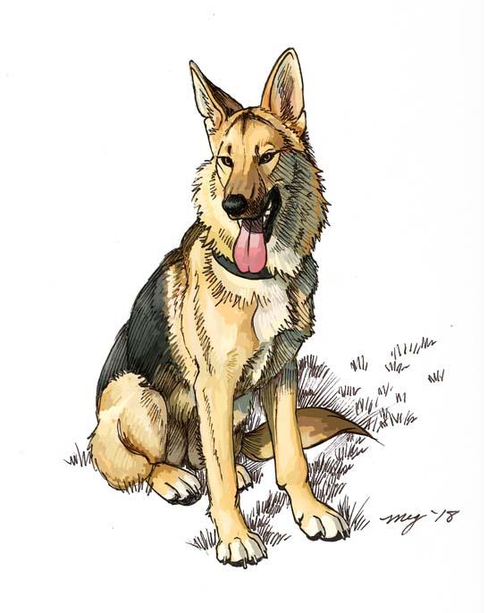 Most recent image: Cindy dog