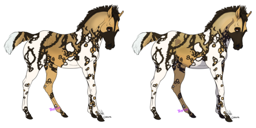 Domino (African Wild Dog)(Sold)