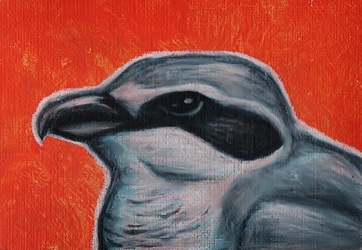 ACEO--Northern Shrike