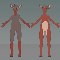 [First Draft] Dikdik species