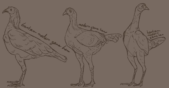 [2012] Modern Game hens
