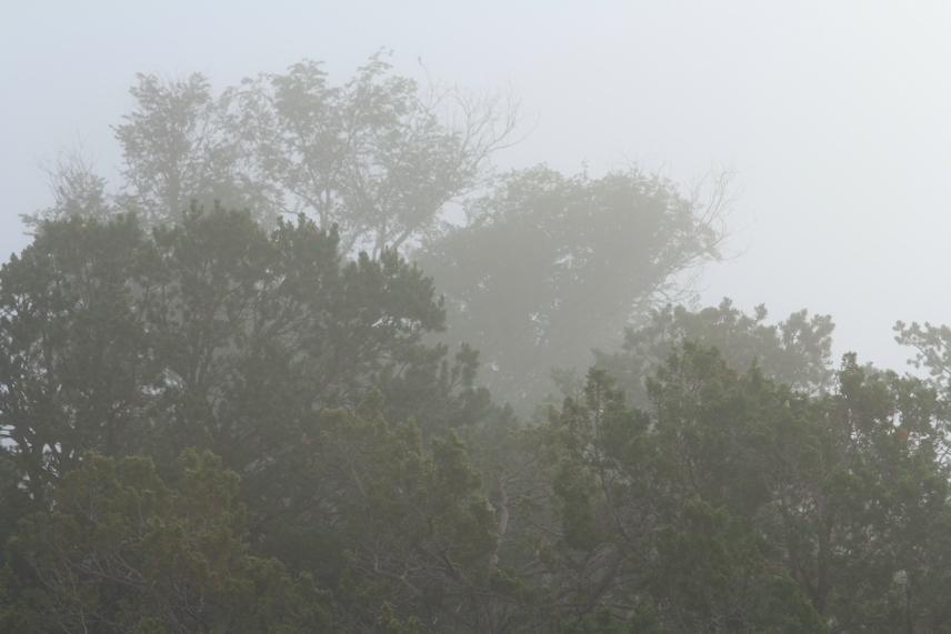 Fade into Mist