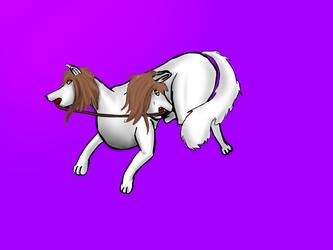 RQT: Playful Shebas
