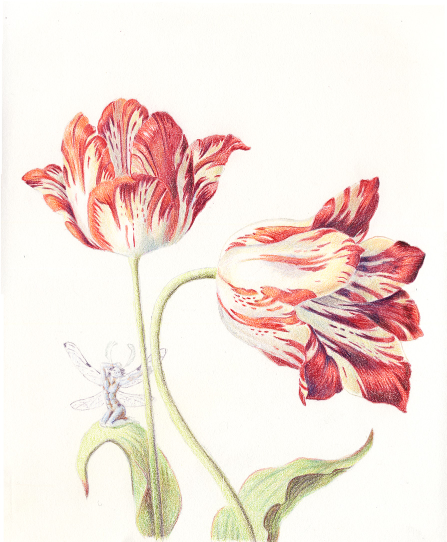 Featured image: Tulips