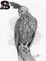 The changeable hawk eagle - pencil art
