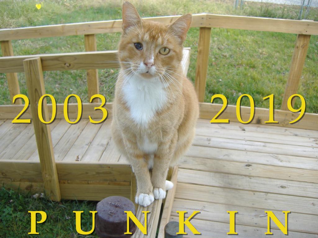Punkin: 2003–2019
