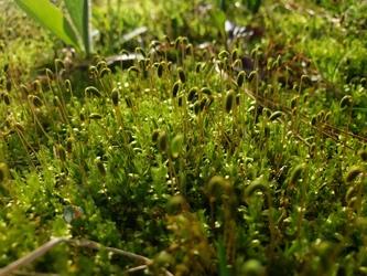 Some Close Moss