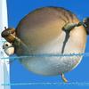 avatar of blbr