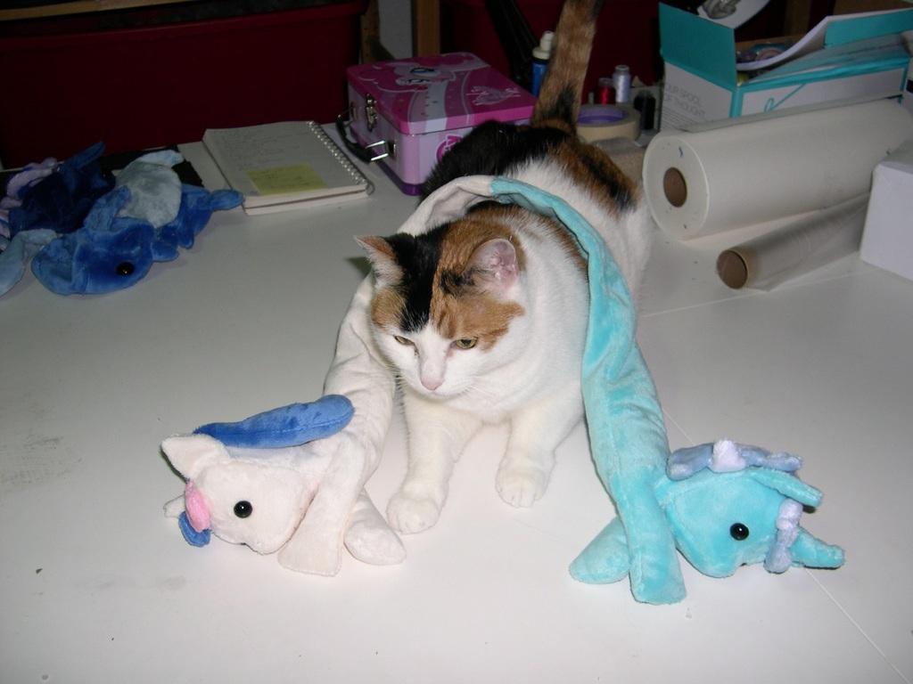 Cat does not understand Lyrabon