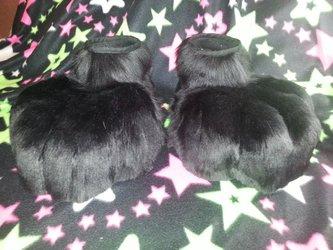 Black feetpaws