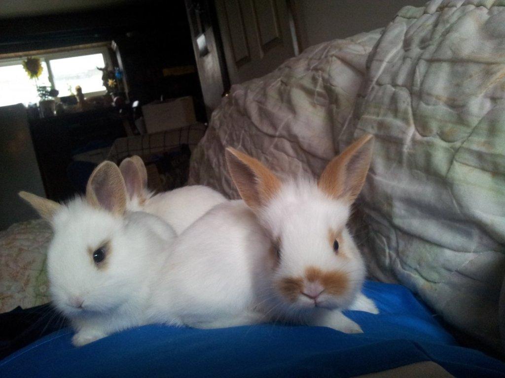 Old Baby bunnies