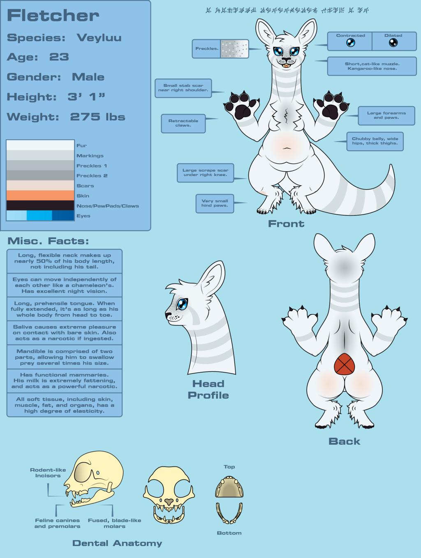 Fletcher Redesign Refsheet (SFW) Version 4
