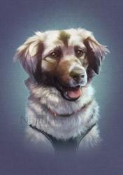 Rubi - pet portrait