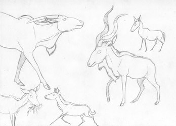 animal sketches 4