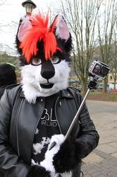 A Wolf & a Camera... Again