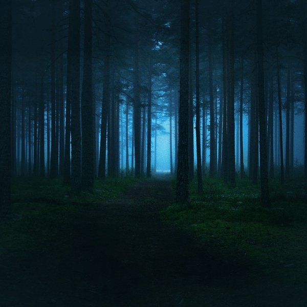 Lost in the Iridescent Forest