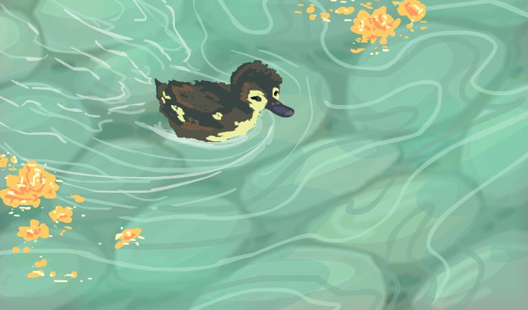 Water Duckling