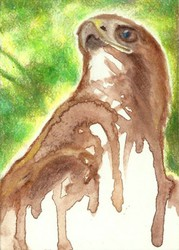 Red Tail :ACEO: