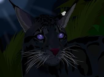 Adult Noć Mačka
