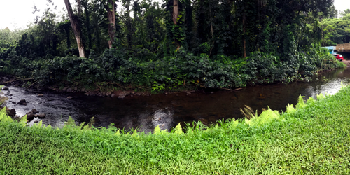 Keahua Stream panorama
