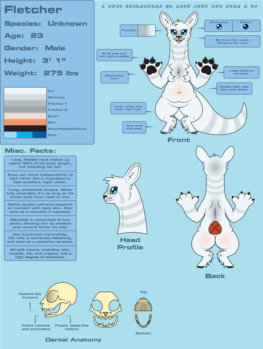 Fletcher Redesign Refsheet (SFW) Version 3
