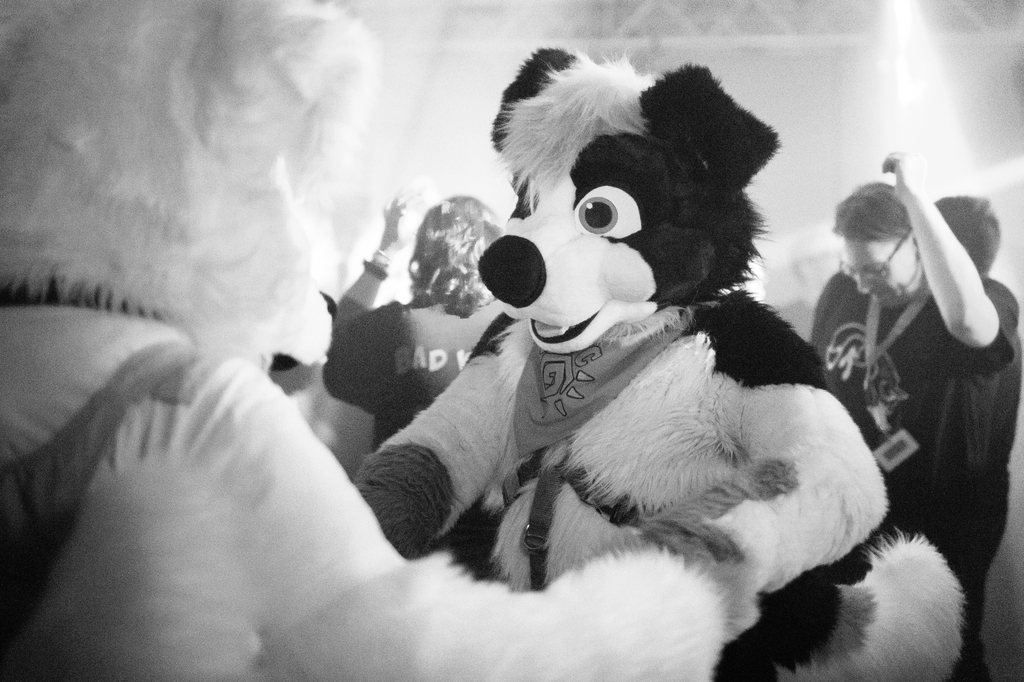 Time to dance your paws off!