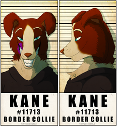 Police Line Up - Kane