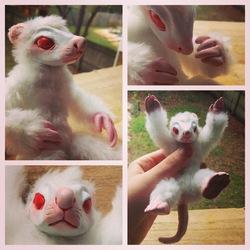 Albino Rat Doll