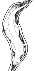 Vore - Long Slide