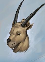 Ibex Portrait [C]