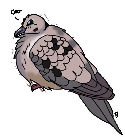 Morning little dove