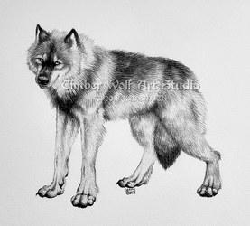 Black Phase Wolf