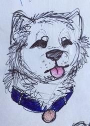 Shiba Inu Sketch
