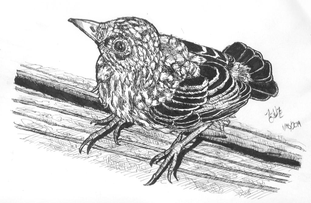 Most recent image: Bird Study