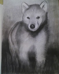 Wolf Pup Charcoal Drawing