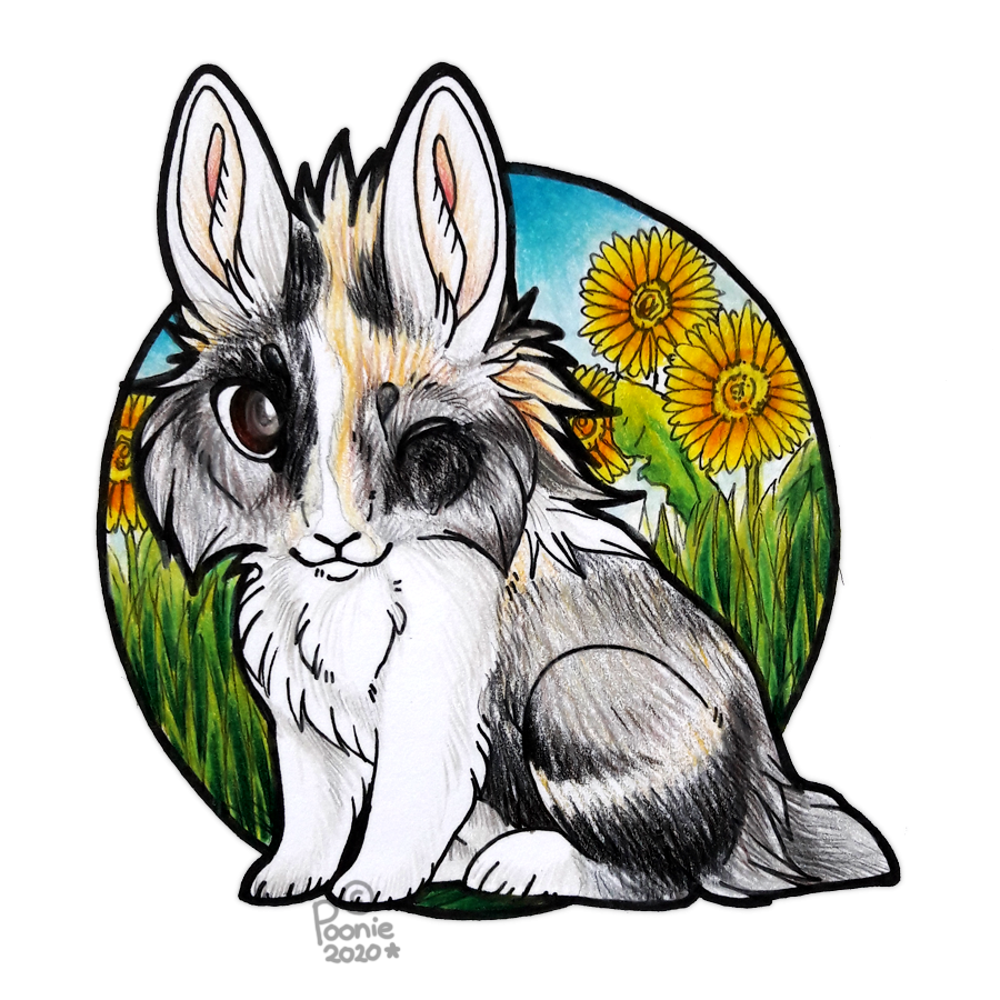 Most recent image: Kodi with the Dandelions