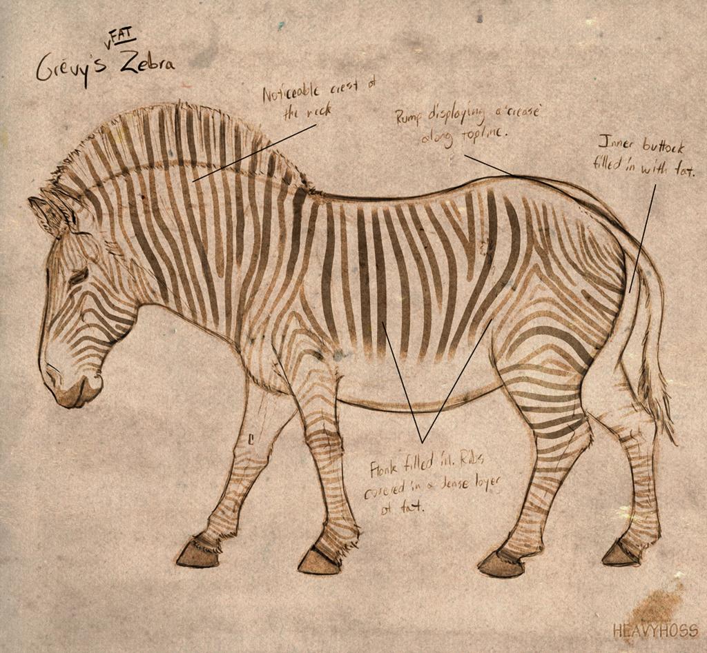 Noone's Zebra [Fat]