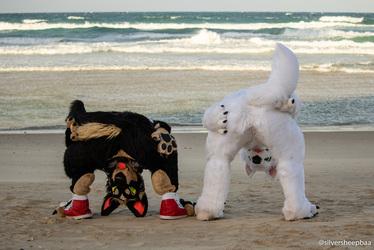 FurDU 2018: Flexible Canines