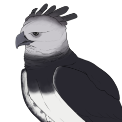 Decembird 5