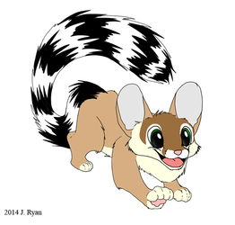Excited Ringtail