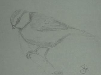 Little Birdy