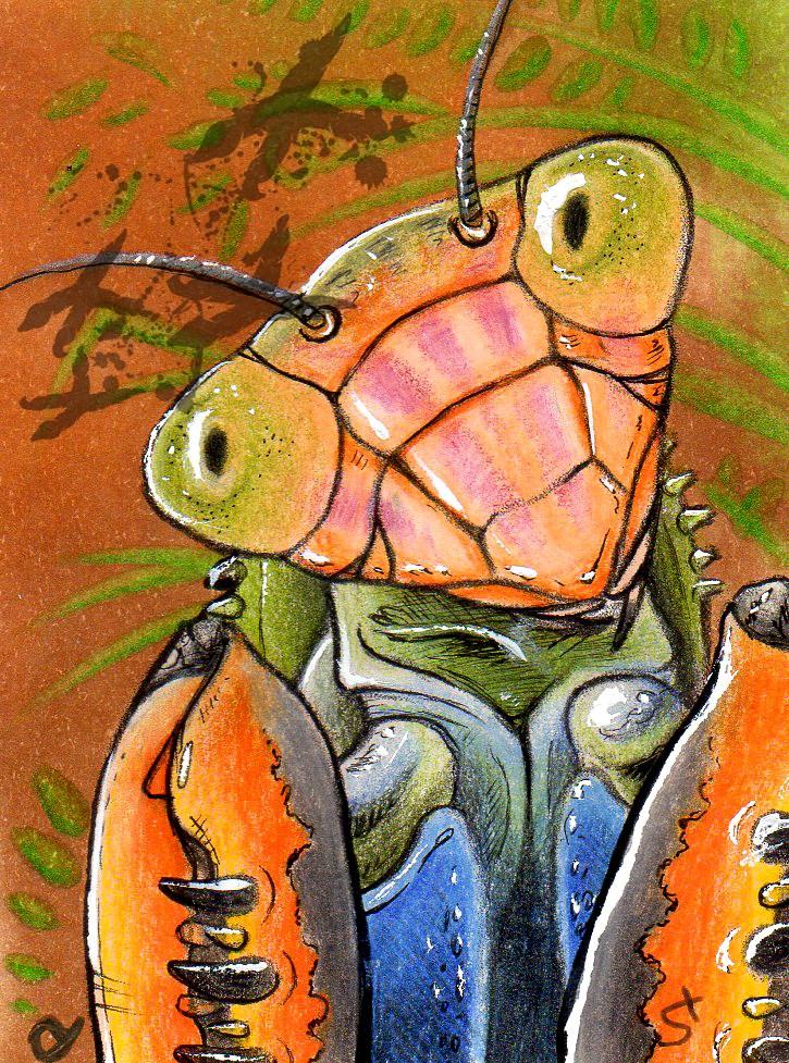 Mantis ACEO