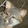 avatar of Schizofennec
