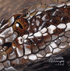 Massasauga snake badge
