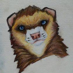 Grumpy Ferret